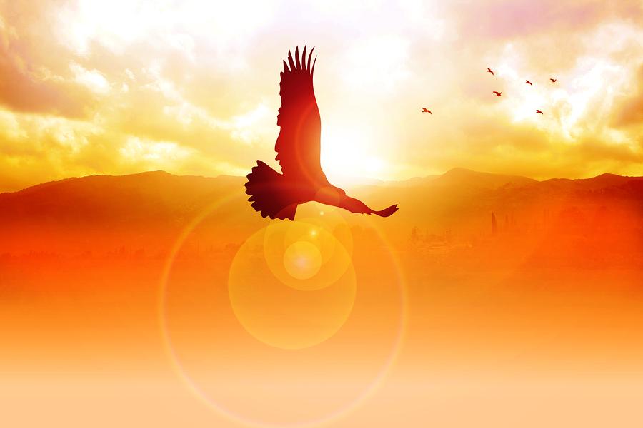 Eagle at sunrise