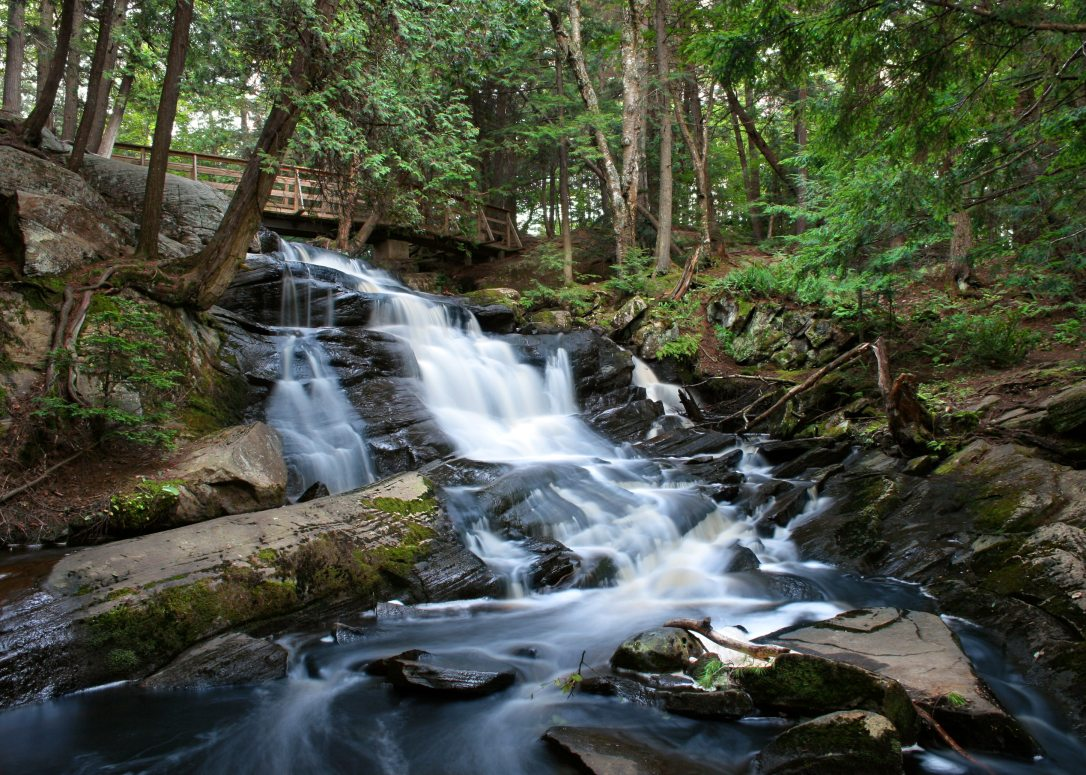creek-forest-nature-68632 (1)