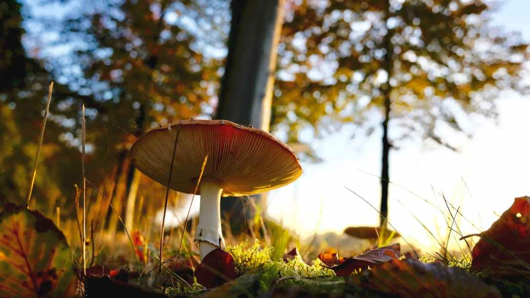 Mushroom growing in a forest