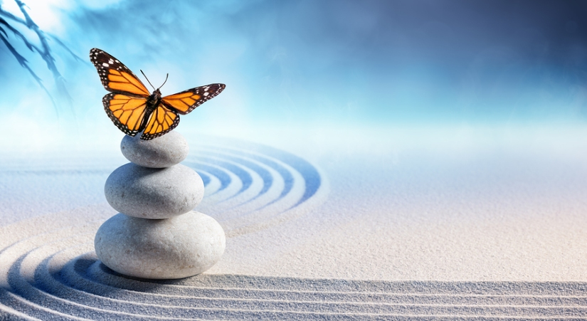 Butterfly on zen Stones